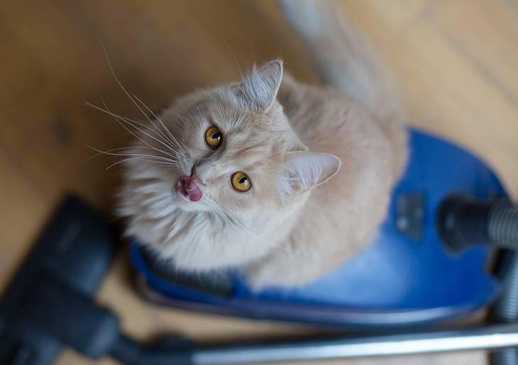 Katze auf Staubsauger