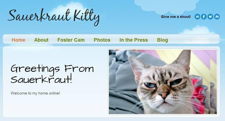 Screenshot vom Blog der Katze Sauerkraut