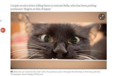 Katze hinter Briefschlitz