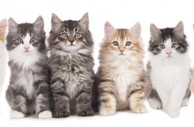 sechs Kätzchen