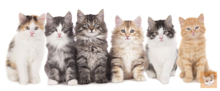 Simon S Cat Video