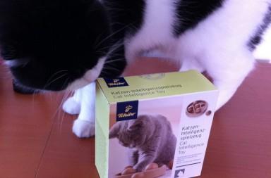 Kater Elvis mit Katzenspielzeug