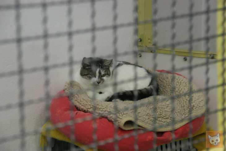 Tierheimkatze