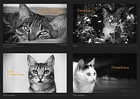 Tiertafel Katzenkalender 2020
