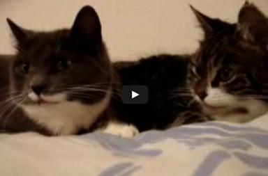 Katzen unterhalten sich