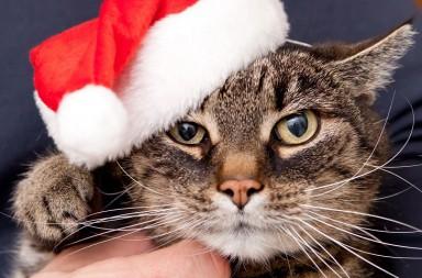 Katze mit Nikolausmütze