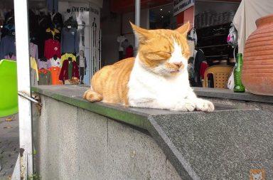 Weltkatzentag 2018: Rote Katze in Antalya