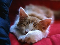 Weltkatzentag 2019: EKH