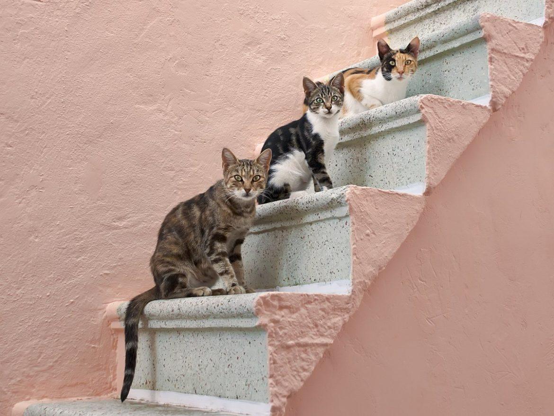 Weltkatzentag 2020