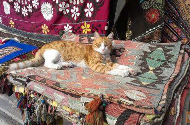 Rote Katze auf türkischem Teppich