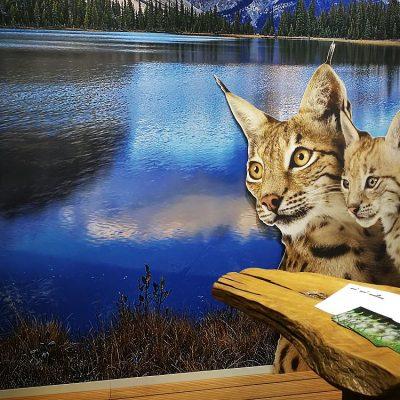 Wildcat Messestand