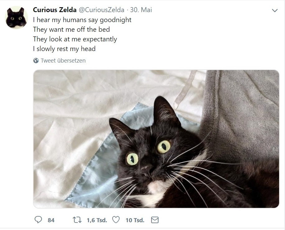 Curious Zelda