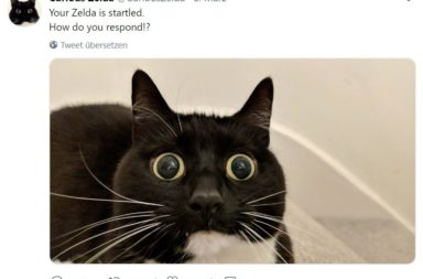 Screenshot Curious Zelda