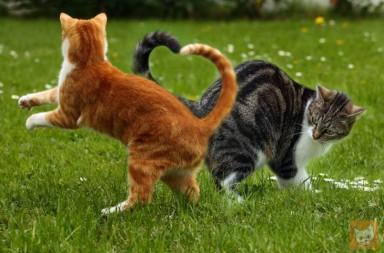 Urteil Nachbar Muss Katze Im Garten Dulden
