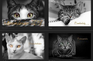 Katzenkalender 2019 - Tiertafel München