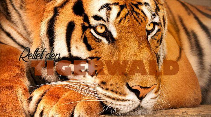 "Kampagnenmotiv ""Rettet den Tigerwald"""