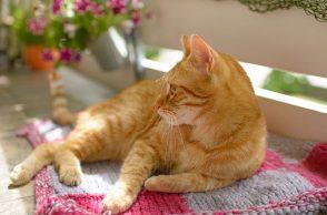 Agila-Gewinnspiel: Rote Katze auf Balkon